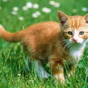 Все кому не безразлична судьба животных! group on My World