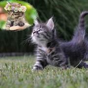 Кот домашний on My World.