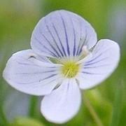 Татьяна Татаринцева on My World.