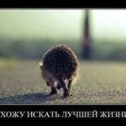 Елена Дмитриева on My World.